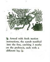 scarab_v_moth